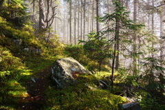 Path in the dense forest in the fog. Path in the dense forest in the early autumn morning fog Royalty Free Stock Photos