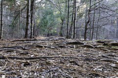 Path Destruction Woods Royalty Free Stock Images