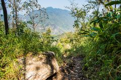 Path of Doi Luang Chiang Dao Mountain Landscape Royalty Free Stock Image