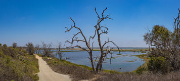 Path Down to California Wetlands Stock Photography