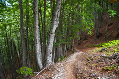 Path down through the woods on a mountain slope Stock Photo