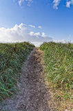 Path through the dunes Royalty Free Stock Photography