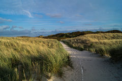 Path through dunes Royalty Free Stock Images