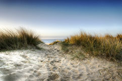 Path through the Dunes. Path leading thorugh sand dunes to the beach at Sandbanks in Poole, Dorset Royalty Free Stock Images