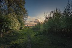Path. Dutch landscape with Sunset Stock Photography