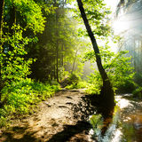 Sunrise in the forest royalty free stock image