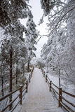 Path in the Emei Mountain in winter Royalty Free Stock Image