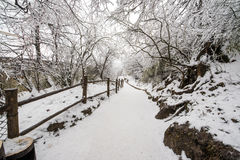 Path in the Emei Mountain in winter Royalty Free Stock Photography