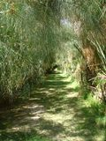 Path emerged of plants of papyrus in Sicily, Italy. Sunny day. Summer time. Travel destination. Rays of sun. Path with green grass. Vegetation o green plants Royalty Free Stock Image