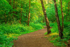 Path in an empty summer forest Royalty Free Stock Photography