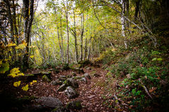 Path through Enchanted Autumn Forest Royalty Free Stock Photos