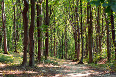 Path through enchanted green forest Stock Photography