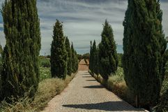 Path encircled by poplars and bushes in a vineyard. Charming cobblestone path encircled by poplars and bushes in a vineyard near Estremoz. A nice little historic stock photos