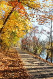 Path in fall colored leaves tree Stock Photos
