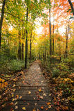 Path Through the Fall Colors of the Forest Stock Photos