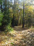 A path in the fall forest. A path in the fall beautiful forest stock photography