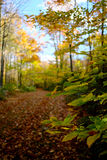 Path Through Fall Forest Royalty Free Stock Image