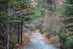 Path Through Fall Forest to Bench with Pine Dogwood and Redwood stock photo