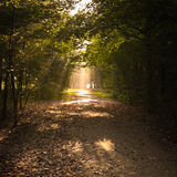 Path in fall with lightrays and fallen leaves Stock Photos