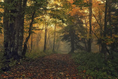 Path of Fall Royalty Free Stock Images