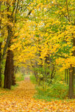 Path in fall park Royalty Free Stock Image