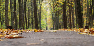 Path in the fall park, close-up to ground Royalty Free Stock Photography
