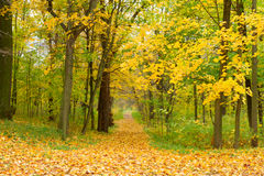 Path in fall park Stock Photography