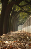 A Path with Fallen Leaves Stock Image