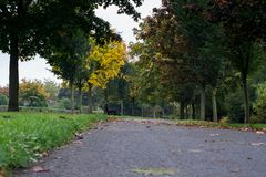 Path with fallen leaves in autumn in Dublin Ireland