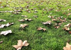 Path of fallen leaves in Autumn. stock photo