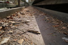 Path with the fallen leaves and needles low angle background Stock Photo