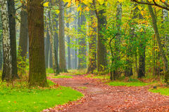 Path with fallen leaves in park stock photos