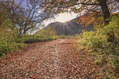 Path of fallen leaves Stock Image