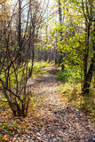 Path with fallen leaves in urban park in autumn Stock Photography