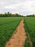 Path through Farmland. Landscape View of a Footpath through Farmland Stock Photo