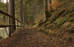 Path with fence in forest Royalty Free Stock Images