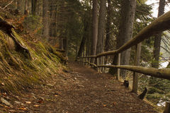 Path with fence in forest Royalty Free Stock Image