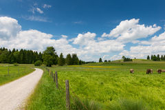 Path with fence next to fresh meadow Royalty Free Stock Image