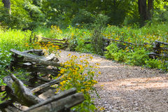 Path Through Fence and Wildflowers stock photography