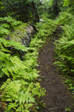 Path Through the Ferns Royalty Free Stock Image