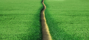 Path Through Field Royalty Free Stock Photography