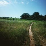 Path through the field Royalty Free Stock Images