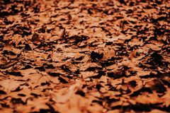 Path of leaves in autumn stock image