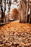 Path of leaves in autumn stock photo