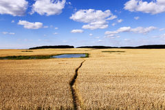Path in the field Royalty Free Stock Images