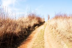 Path through field Royalty Free Stock Photos