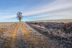 Path in field and solitaire tree on horizon Stock Images