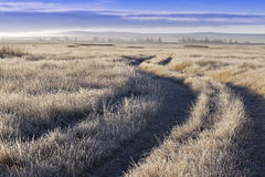Path in the field in winter Stock Image