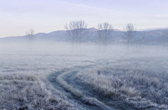 Path in the field in winter Royalty Free Stock Photography