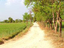 Path in Fields Royalty Free Stock Photography